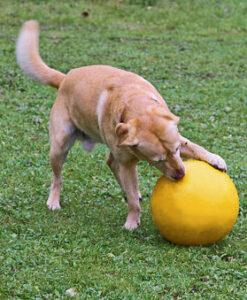 KERBL Treibball für Hunde